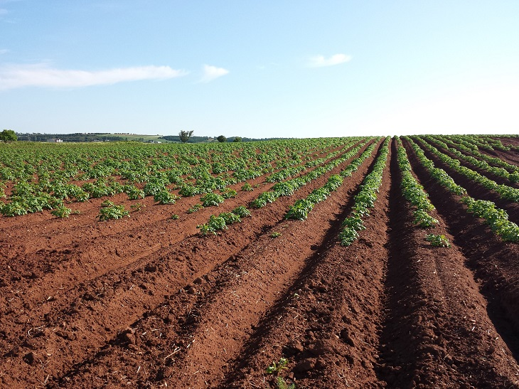 Фото анализ рынка картофелеводства