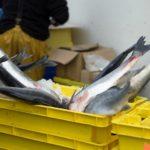 Фото анализ рынка рыбной муки