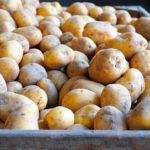 Фото анализ рынка картофеля
