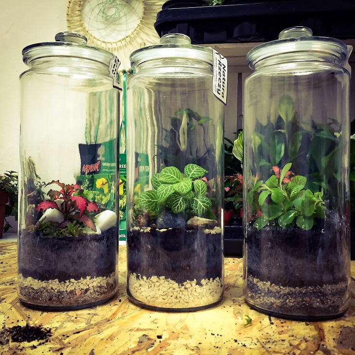 Фото Рынок биологических удобрений и биохимикатов для растений