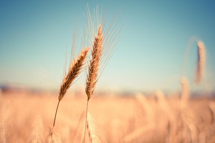 Фото анализ рынок пестицидов Казахстана