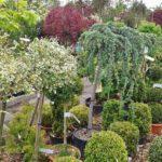 Фото анализ рынка питомников растений