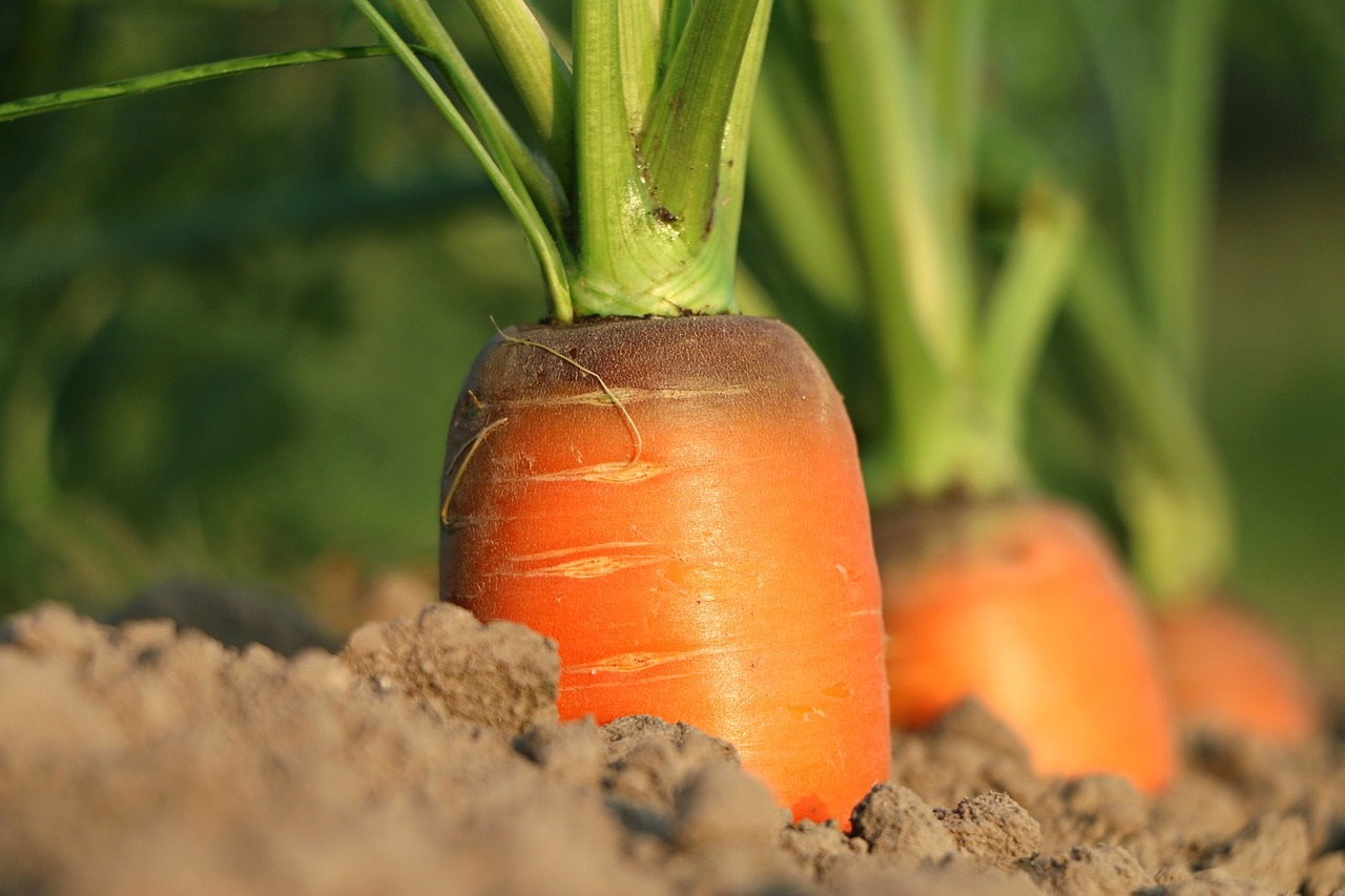Фото анализ рынка моркови