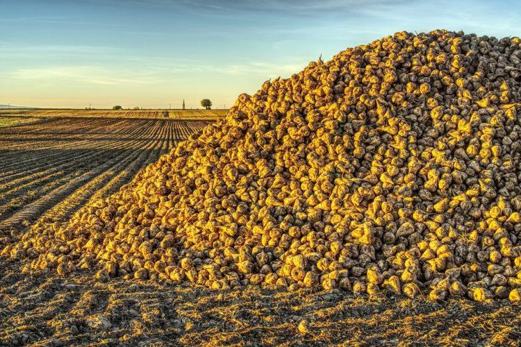 Фото анализ рынка жома