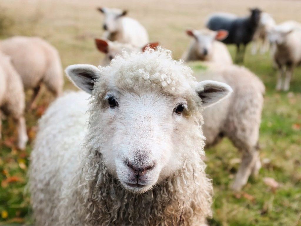 Фото рынок жома для сельскохозяйственных животных