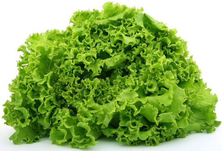 Фото анализ рынка салата в России