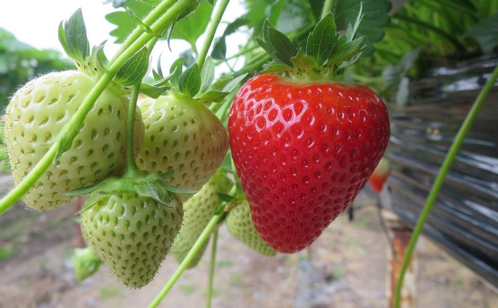 Фото рынок ягод закрытого грунта