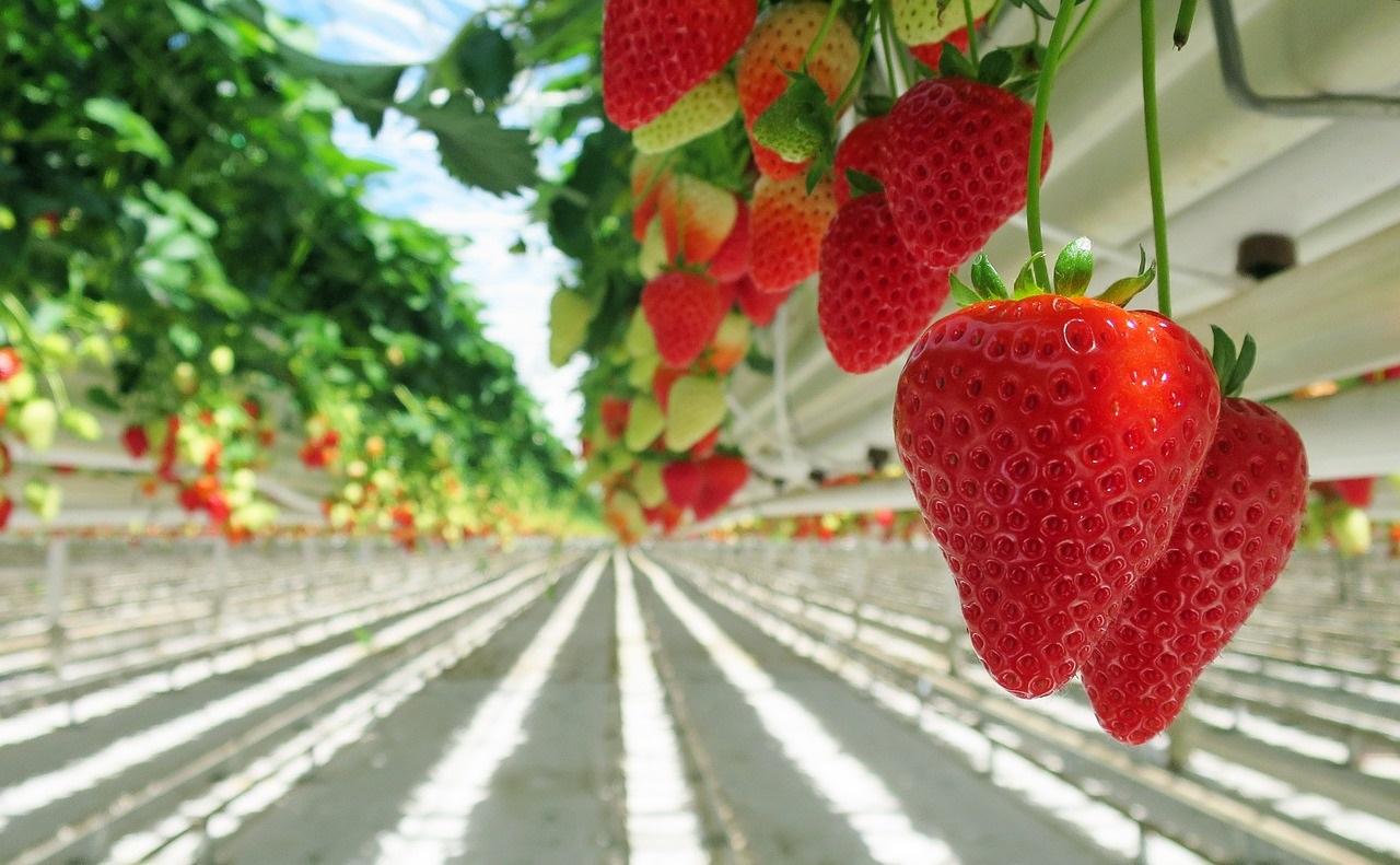 Фото российский рынок ягод