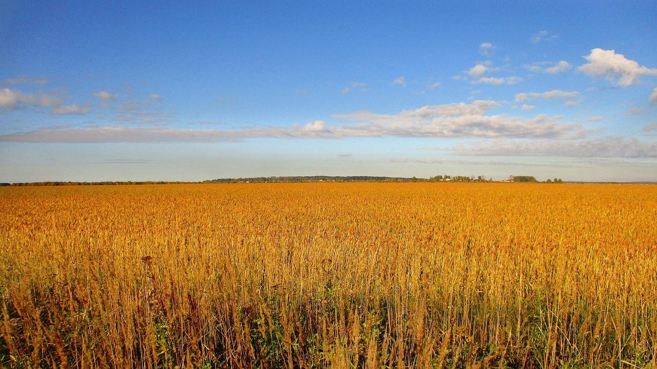 Фото рынок посевных территорий