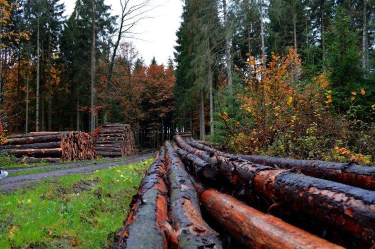Фото рынок лесного хозяйства