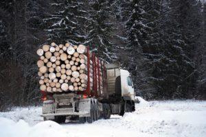 Фото рынок российской лесной промышленности