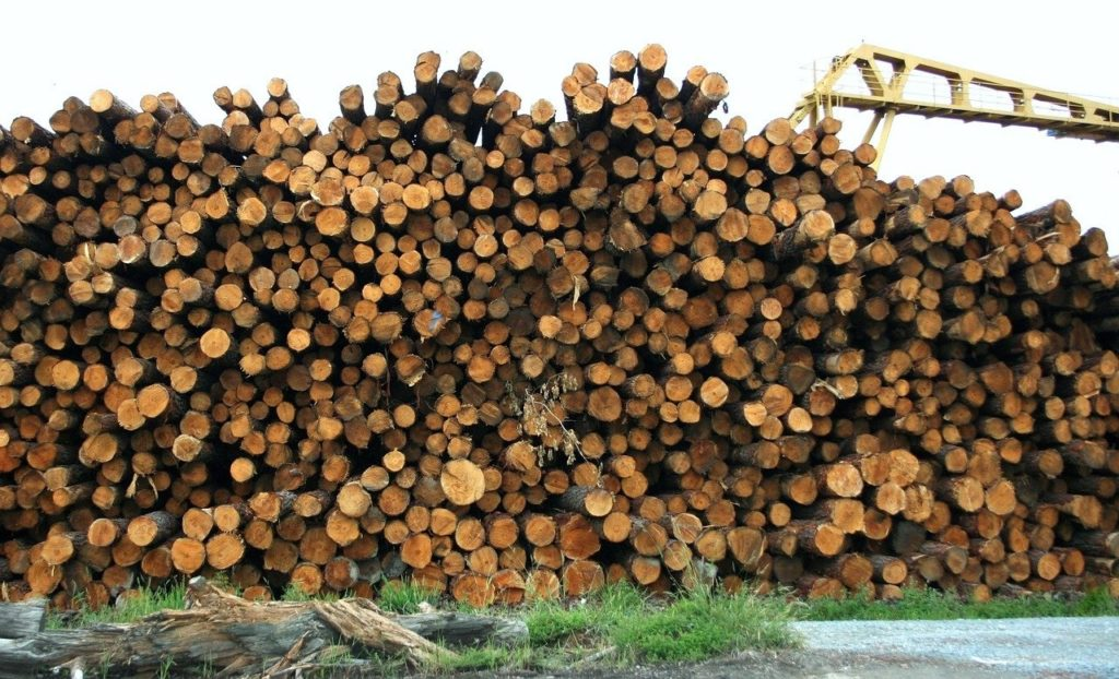 Фото анализ рынка лесной промышленности