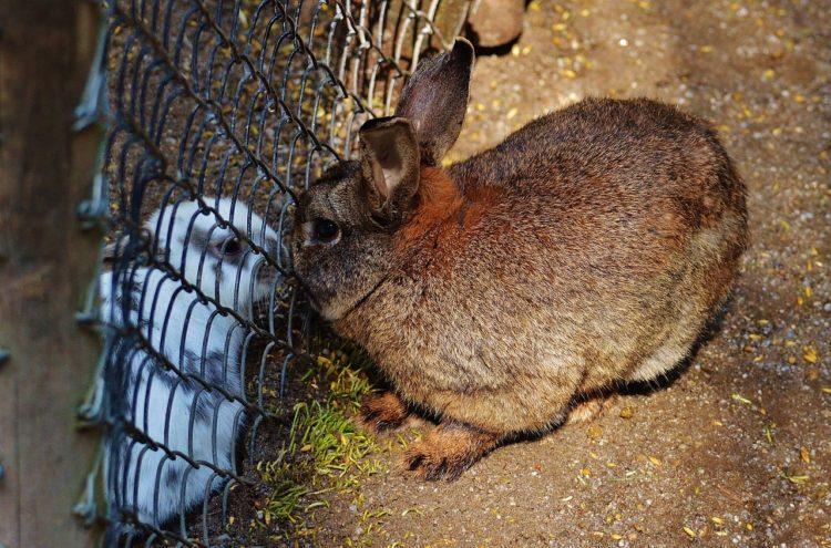 Фото рынок кролиководства