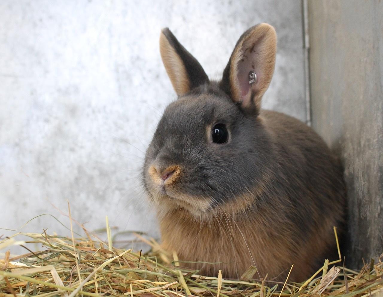 Фото анализ рынка мяса кролика
