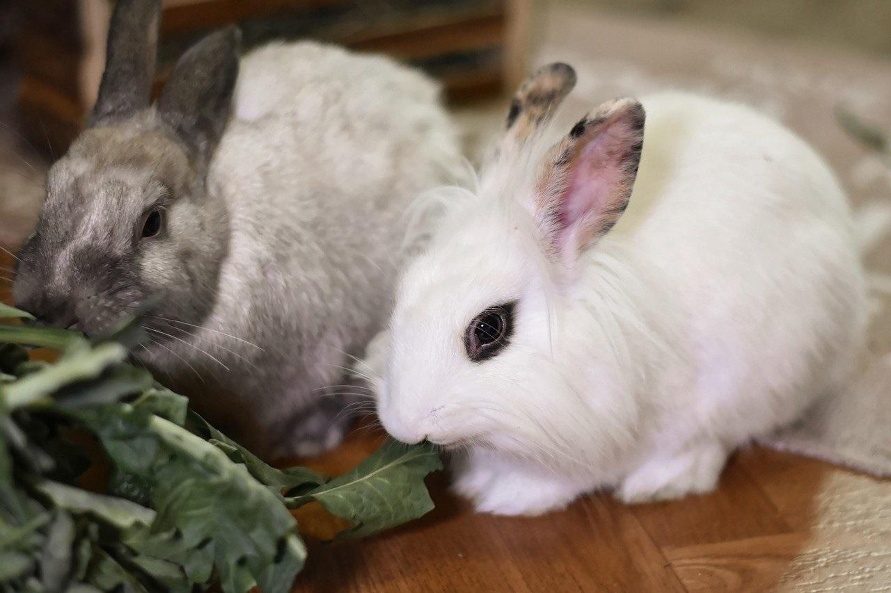 Фото рынок кроличьего мяса. Анализ рынка кроликов