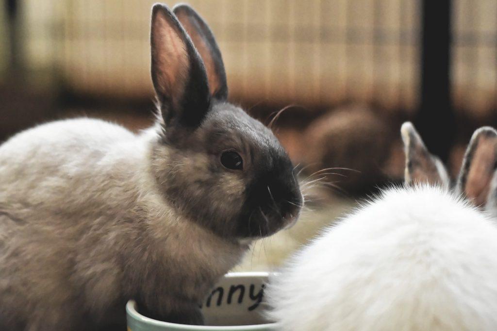 Фото рынок кроликов