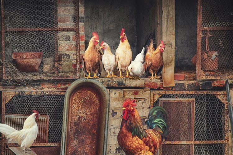 Фото рынок инкубационных яиц