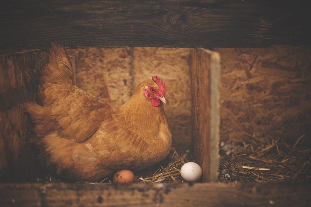 Фото анализ рынка инкубационного яйца