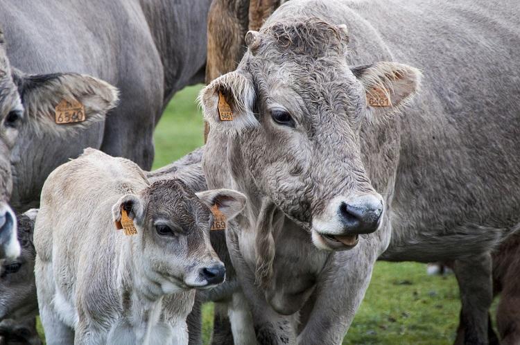Фото рынки животноводства анализ и исследования