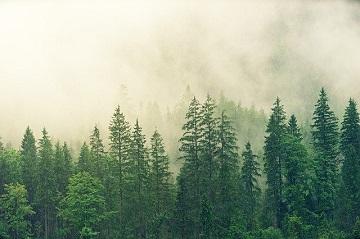Фото исследование лесного рынка