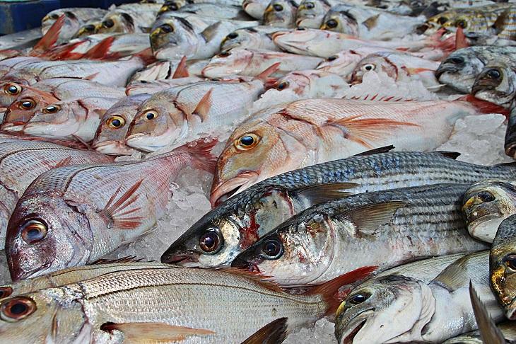 Фото анализ рынка утилизации рыбных отходов