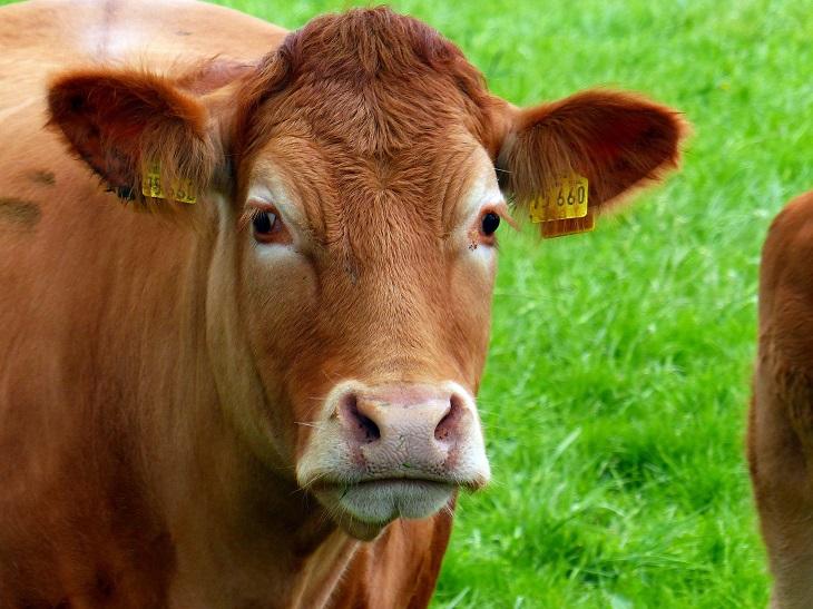 Фото Рынок кормовых протеинов для скота