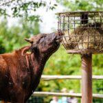 Фото анализ рынка кормов для скота