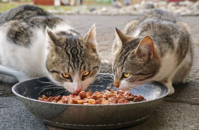 Фото анализ рынка товаров для животных