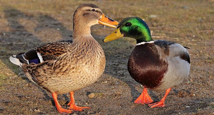 Фото анализ рынка птицеводства