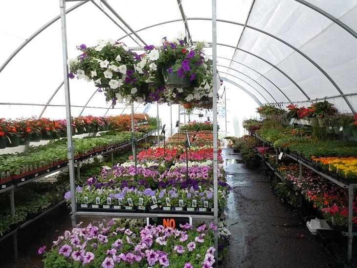 Фото анализ Рынок питомников растений