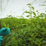 Фото анализ рынка овощей закрытого грунта
