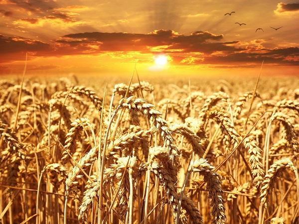 Фото анализ сельскохозяйственных рынков